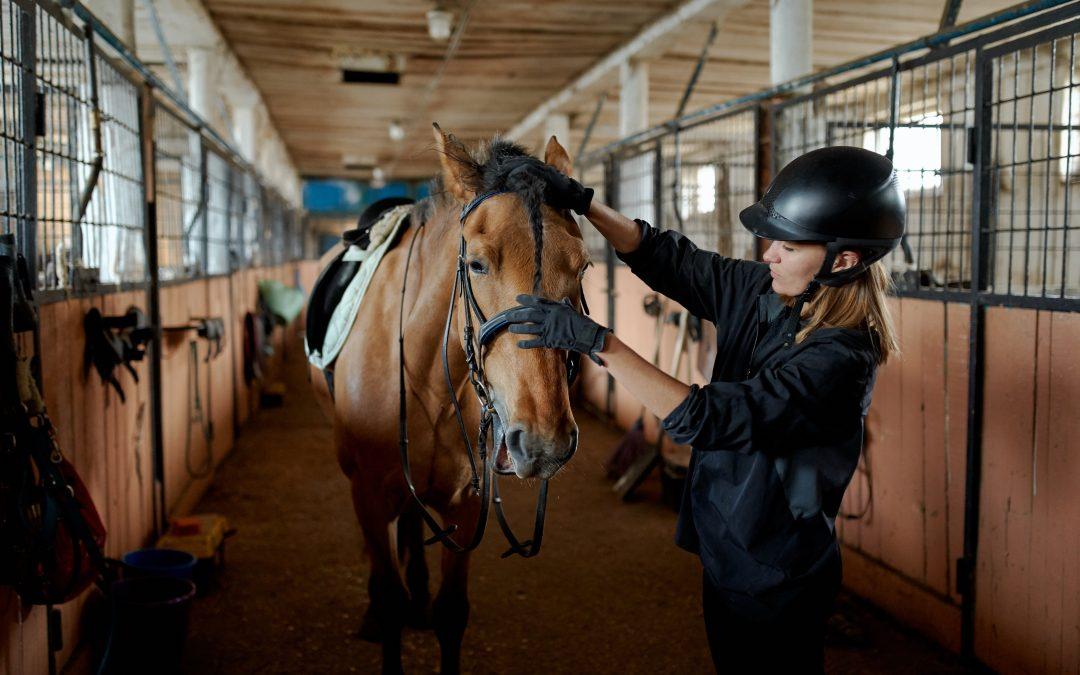 Det har du brug for af hesteudstyr